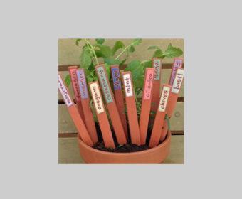 herbstick